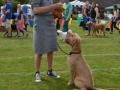 Dog Show Breed Winner