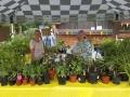 Plant Stall 1